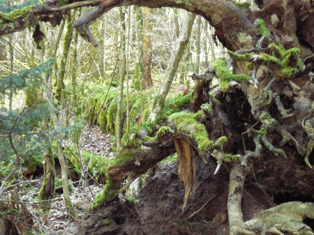 Gratis - Entdeckungsreise für Kinder im Sihlwald