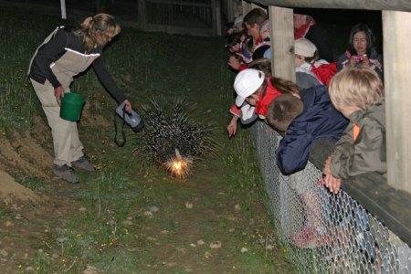Nachtschwärmer-Programm für Familien im Walter Zoo