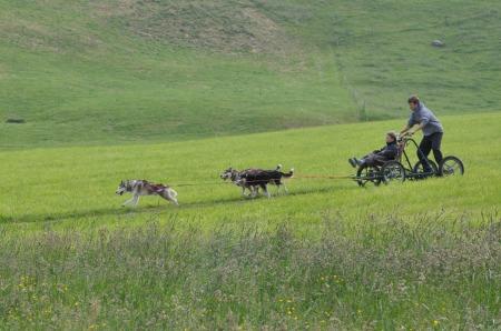 Schnuppertour mit Schlittenhunden – im Grünen!