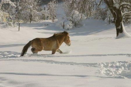 Takhis im Schnee im Langenberg