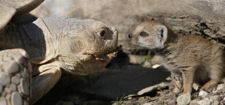 Unterschiedliche Ansichten beim Walter Zoo und beim Zoo Eichberg