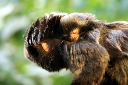 Copyright Bilder: Stiftung Papiliorama / Thomas Rawyler