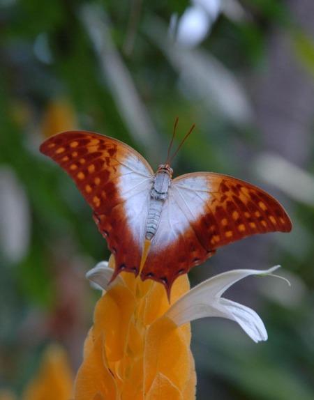 Das Papiliorama in Kerzers hatte 2011 stabile Besucherzahlen