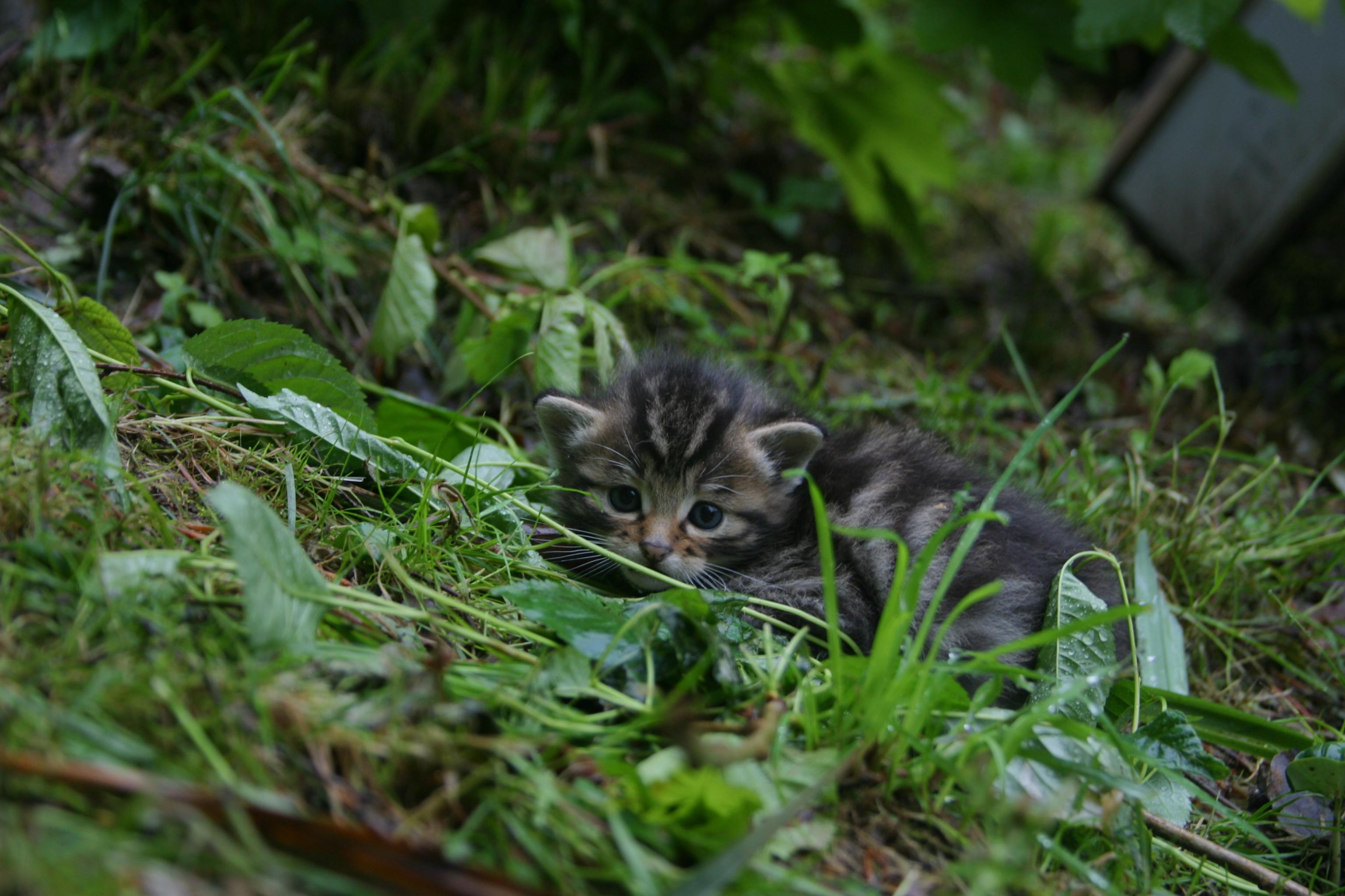 Wildnispark Zürich, Langenberg junge Wildkatze - Die ersten Ausflüge ganz alleine