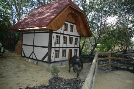 Diogène_le_cochon_laineux_et_sa_nouvelle_demeure
