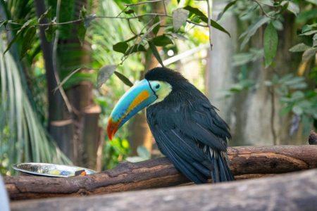 Wohl meist-fotografierter Vogel der Schweiz im Papiliorama gestorben